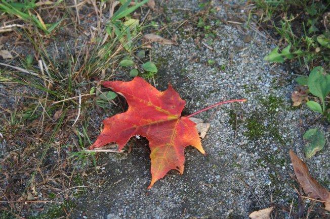 Wordless Wednesday - Autumn in the Adirondacks